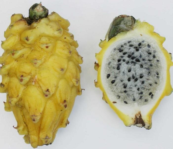 Pitaya gialla, un aiuto per l'attività intestinale