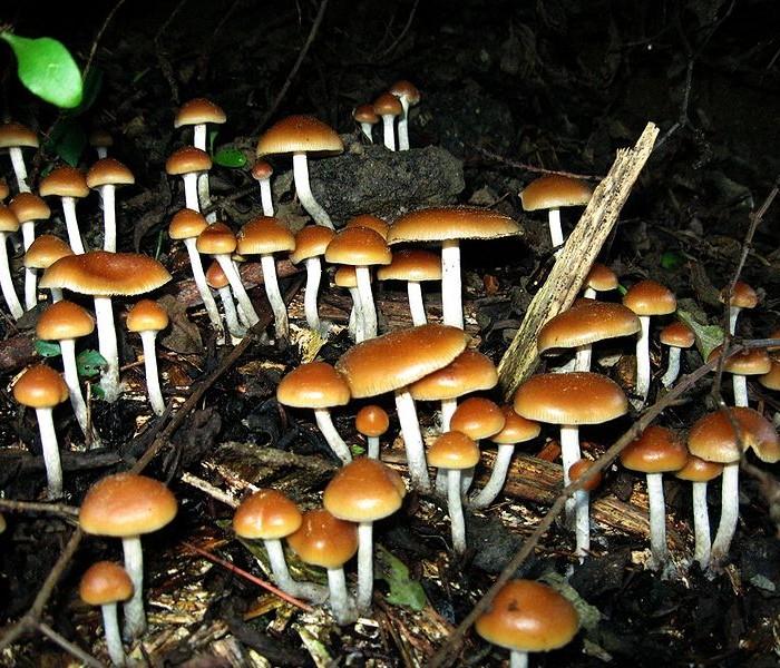 Il fungo magico