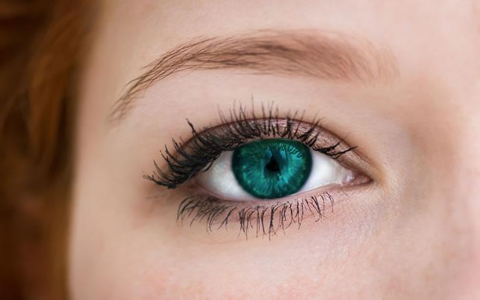 Una mini-retina dalle cellule staminali