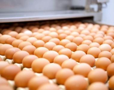 Ma le uova sono sicure?