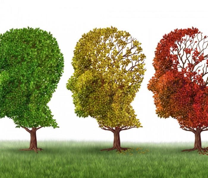 Che relazione c'è tra i microbi intestinali e l'Alzheimer?